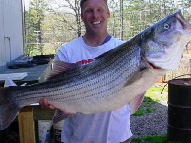 Top Gunn Striper Guide
